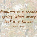 A little autumn poem
