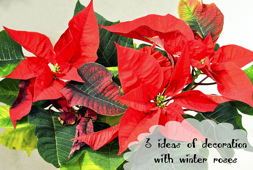 3 simple winter rose decoration ideas