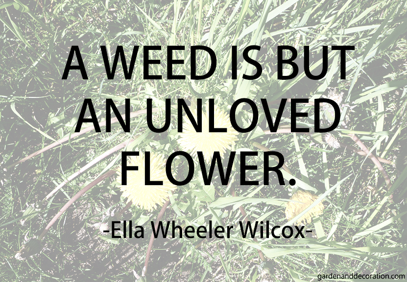 a-weed-is-but-an-unloved-flower