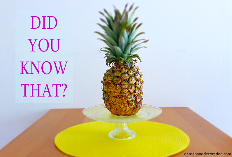 Did you know this about pineapples?