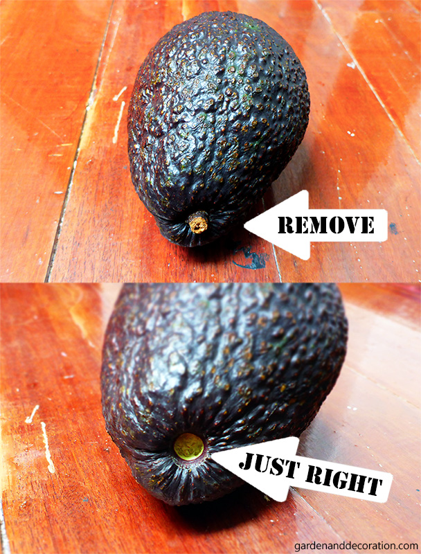 When is an avocado ripe enough?