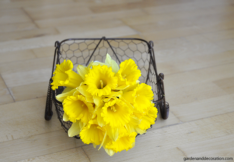rustically daffodil arrangement