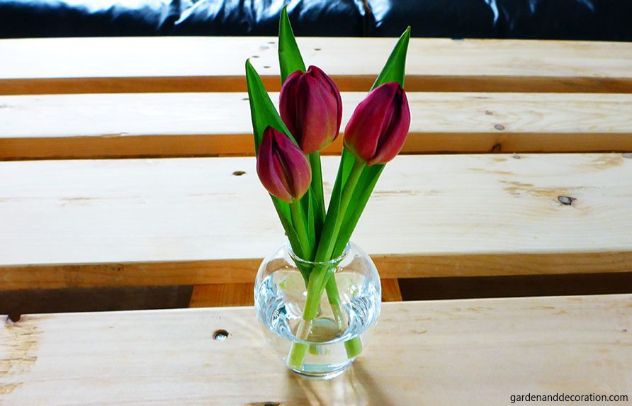 tulips in a small vase