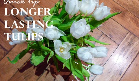 Quick tip for longer lasting tulips