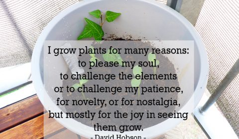 Why growing plants?
