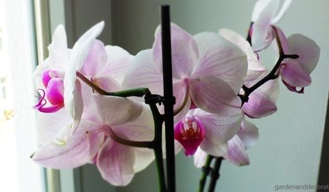How to care for orchids?