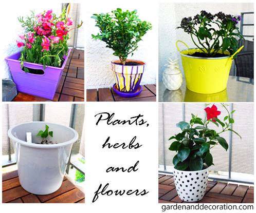 plants, herbs and flowers