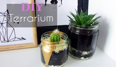 How to create a terrarium easily?