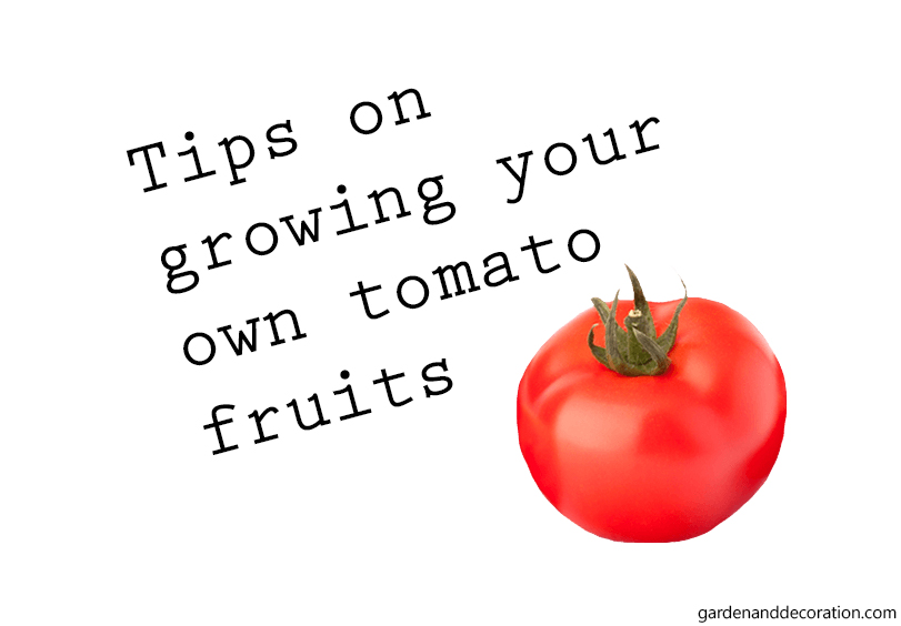 How to grow your own tomatoes?