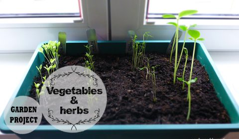How to grow your own vegetables & herbs?
