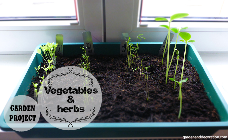 DIY garden project: vegetables and herbs