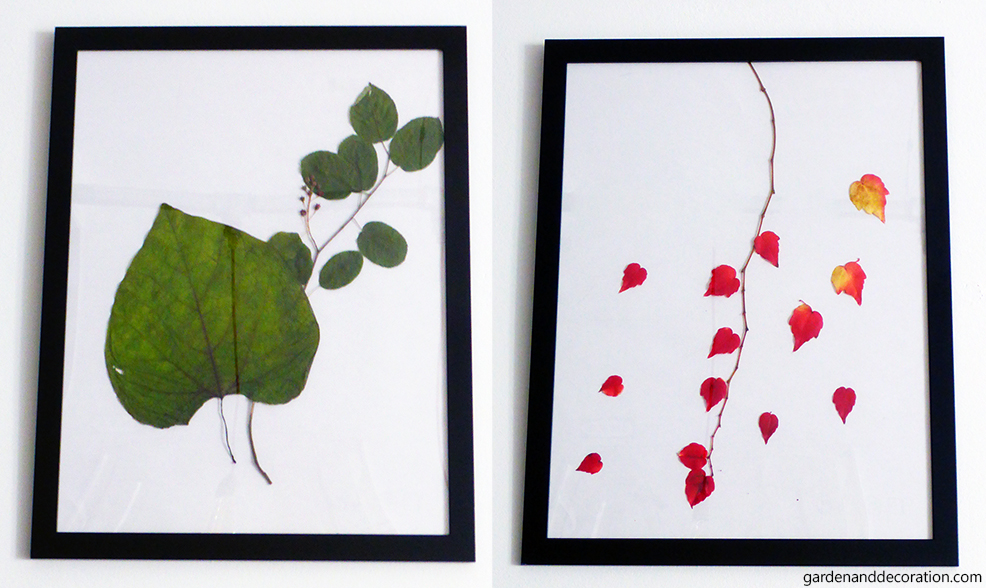 Grenn and red leaves in picture frames