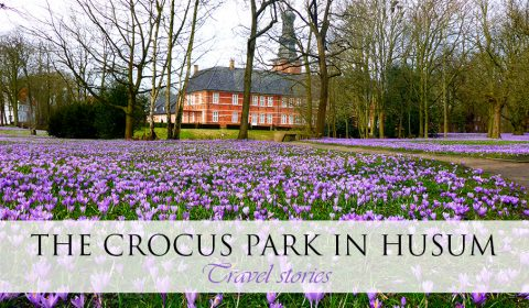 Visit at the Crocus Park in Husum