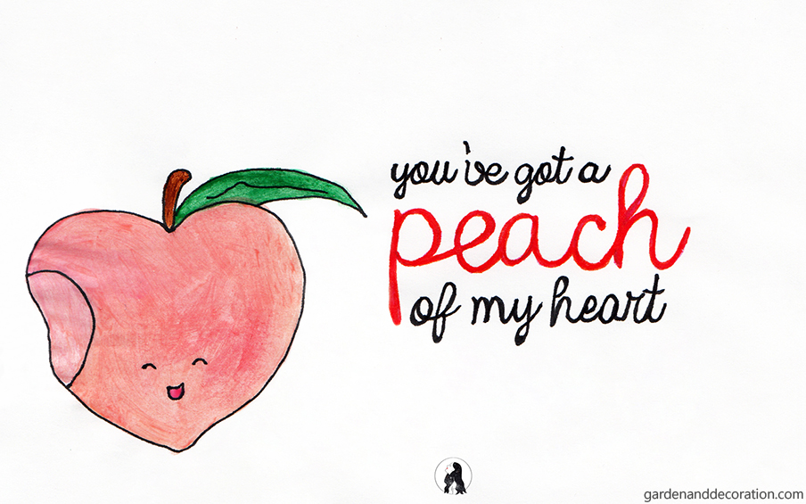 You´ve got a peach of my heart_by Maggy from gardenanddecoration.com