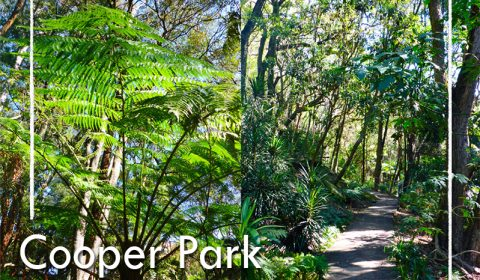 An urban jungle in Sydney: Cooper Park