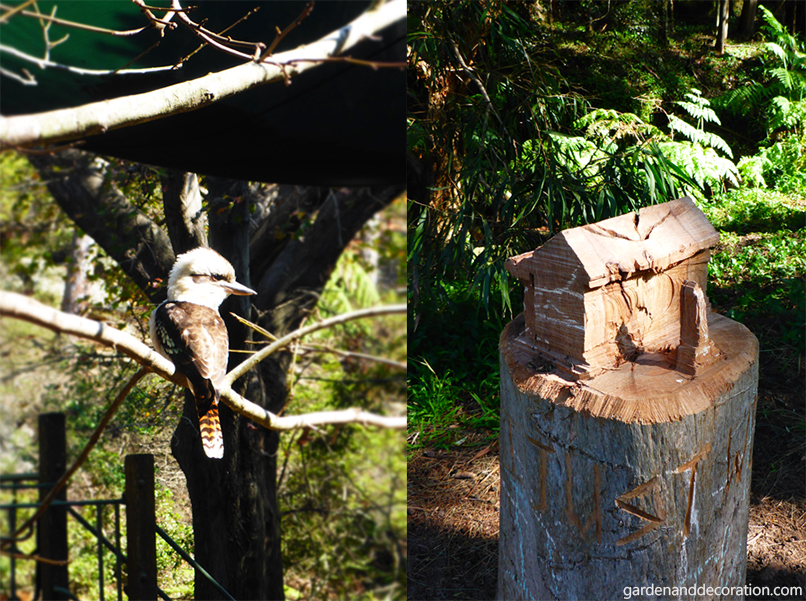 Kookaburra and wood house in Cooper Park, Sydney