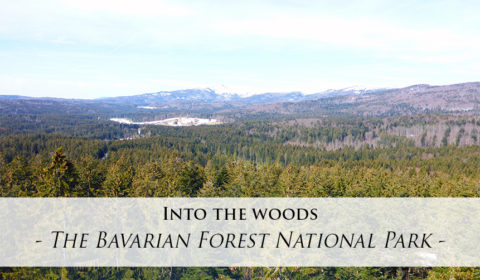 A drive through the Bavarian Forest National Park