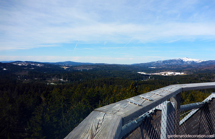 View from the platform of the canopy pathway in the Bavarian Forest