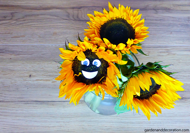 Smiling sunflower between two normal sunflowers
