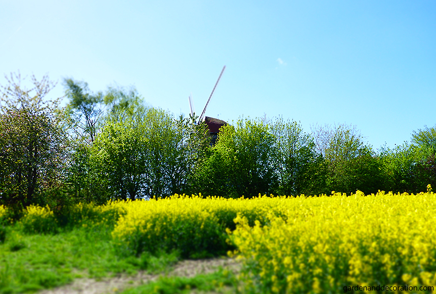 Windmill in landscape