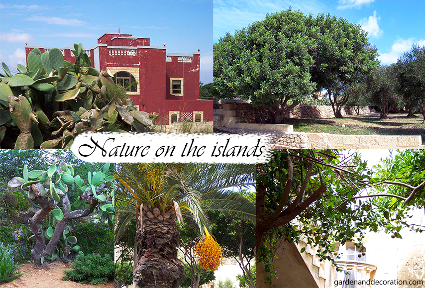 Nature on the islands of Malta and Gozo