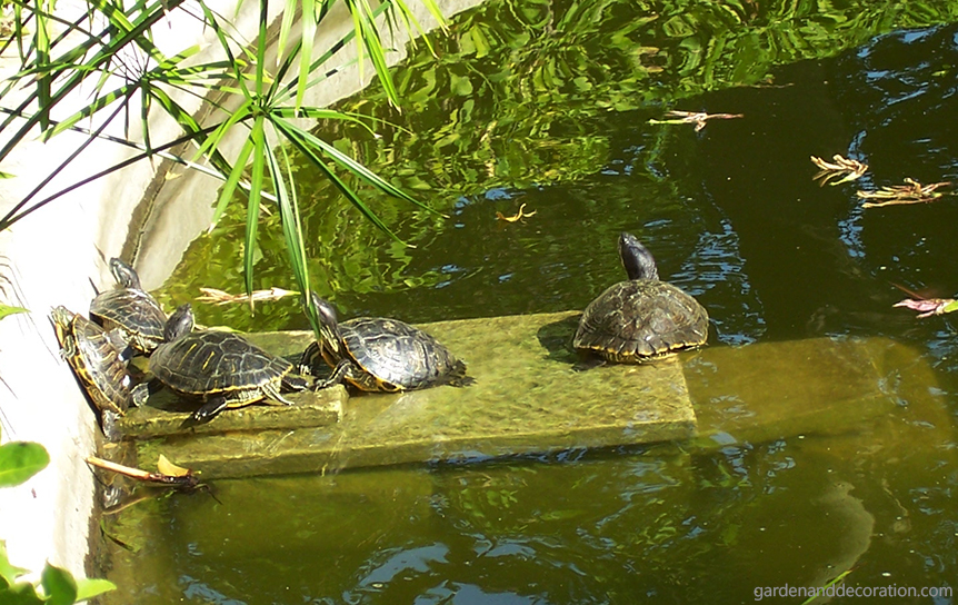 Turtles in the San Anton Gardens on Malta