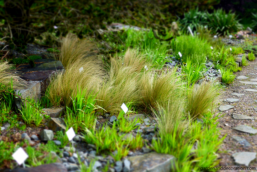 Grass in the botanical garden in Kiel, Germany