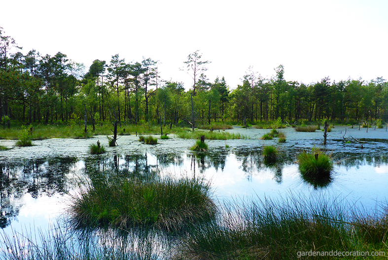 Small lake in the Pietzmoor, Germany