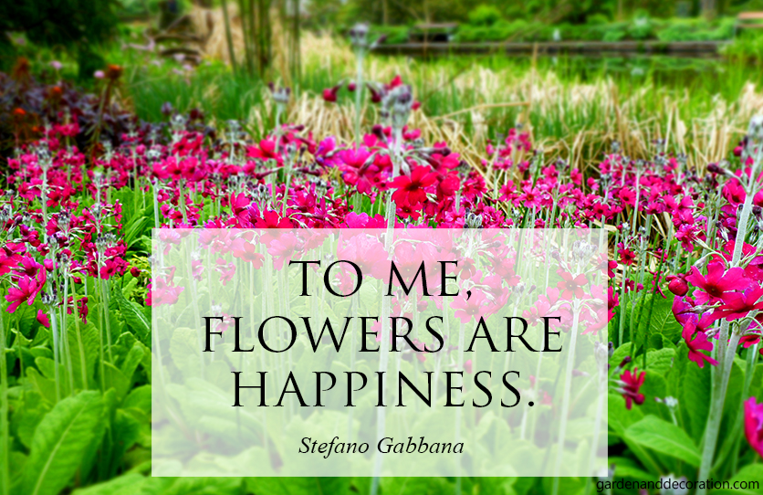 To me flowers are happyness.
