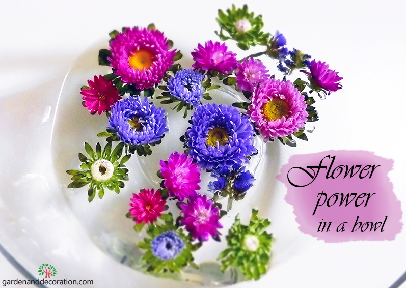Colourful asters in a bowl