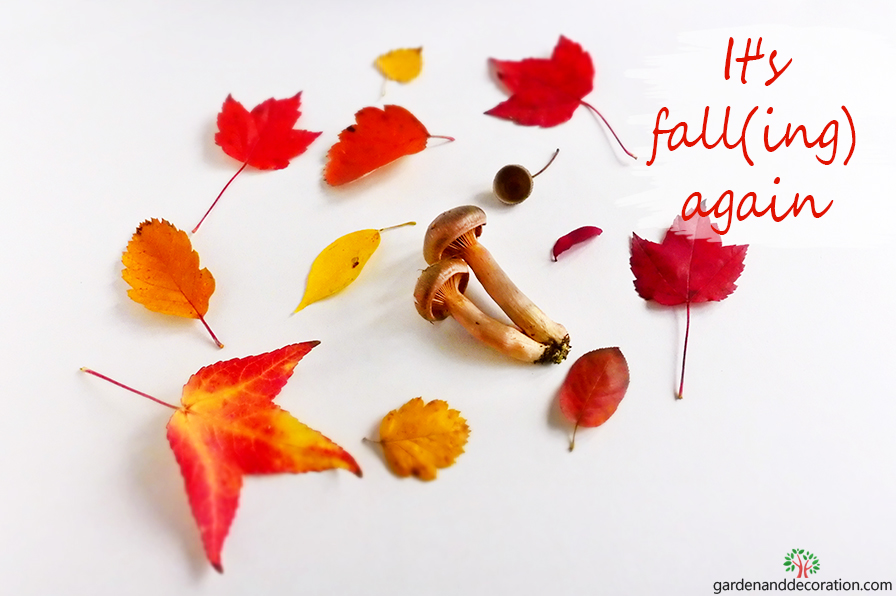 It´s fall(ing) again by gardenanddecoration.com